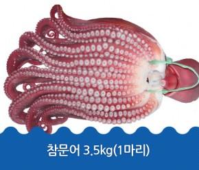 정품문어 3.5kg